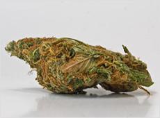marijuana-attorney-michigan
