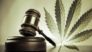 Legal Defenses and Analysis of Recreational Marijuana in Michigan